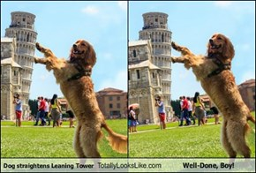 Dog straightens Leaning Tower Totally Looks Like Well-Done, Boy!