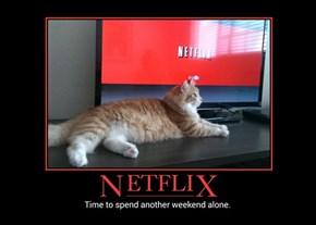 Cats Love Nextflix