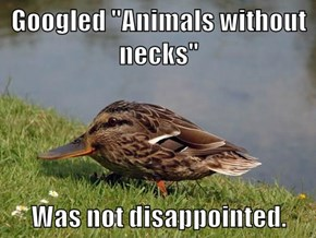 "Googled ""Animals without necks""  Was not disappointed."