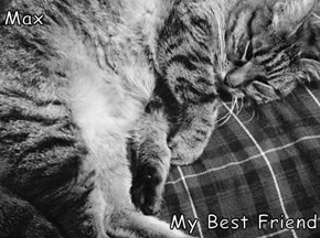 Max  My Best Friend