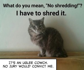 "What do you mean, ""No shredding!""?"