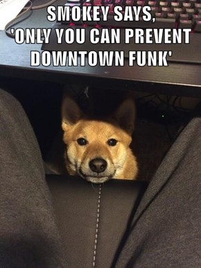 SMOKEY SAYS,                    'ONLY YOU CAN PREVENT DOWNTOWN FUNK'