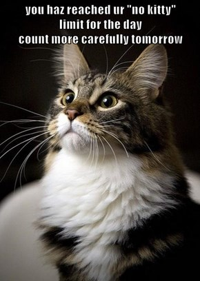"""you haz reached ur """"no kitty""""                               limit for the day                                                                                              count more carefully tomorrow"""