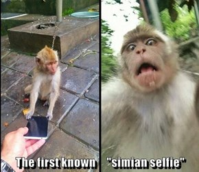 "The first known     ""simian selfie"""