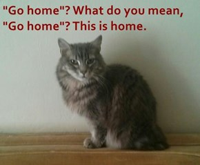 """Go home""? What do you mean, ""Go home""? This is home."