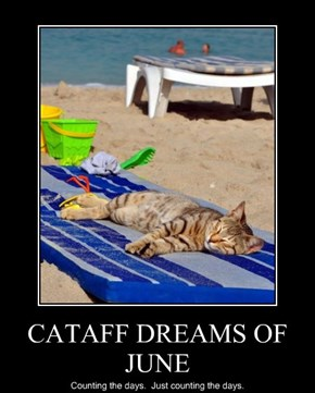 CATAFF DREAMS OF JUNE