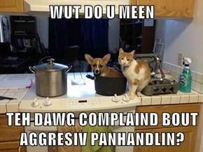 WUT DO U MEEN  TEH DAWG COMPLAIND BOUT AGGRESIV PANHANDLIN?