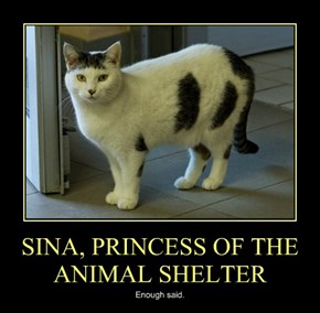 SINA, PRINCESS OF THE ANIMAL SHELTER