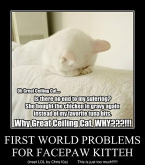 FIRST WORLD PROBLEMS FOR FACEPAW KITTEH