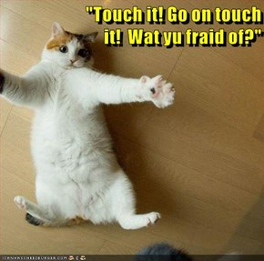 """""""Touch it! Go on touch                                                                                      it!  Wat yu fraid of?"""""""