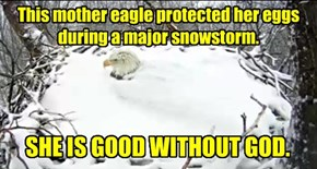 This mother eagle protected her eggs during a major snowstorm.