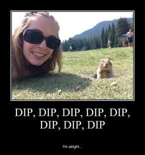 DIP, DIP, DIP, DIP, DIP, DIP, DIP, DIP