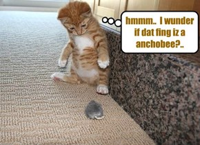 Snookers thinks he may habs fownd hiz first anchobee..