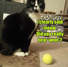 I clearly said 'meow'. Did you really hear 'woof'?