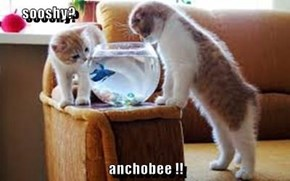 sooshy?  anchobee !!