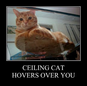 CEILING CAT  HOVERS OVER YOU
