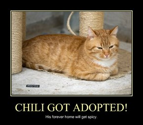 CHILI GOT ADOPTED!