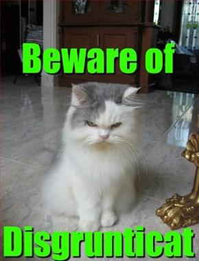 Beware of     Disgrunticat