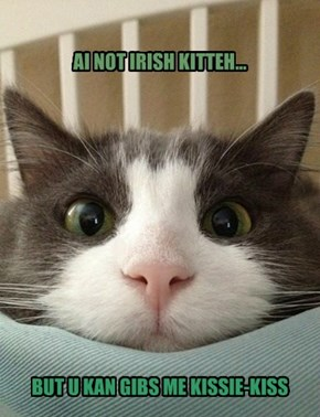 AI NOT IRISH KITTEH...