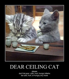 DEAR CEILING CAT
