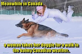 Meanwhile in Canada  a woman takes her doggie for a walk in the balmy Canadian weather..