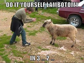 DO IT YOURSELF LAMBOTOMY  IN 3 ... 2 ...