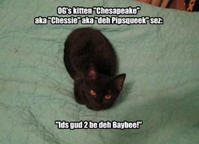 "OG's kitten ""Chesapeake"" aka ""Chessie"" aka ""deh Pipsqueek"" sez:"