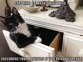 CATS WILL GET INTO EVERYTHING ...  INCLUDING YOUR DRAWERS IF YOU'RE NOT CAREFUL!