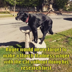 Roger would never forget to make a March Madness wager with the cat without doing his research first