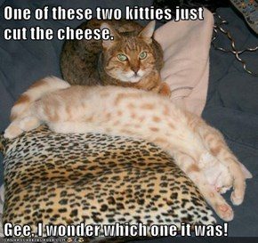 One of these two kitties just              cut the cheese.  Gee, I wonder which one it was!