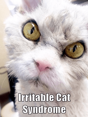 Irritable Cat Syndrome
