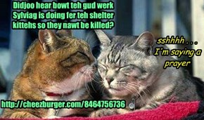 Didjoo hear bowt teh gud werk  Sylviag is doing fer teh shelter  kittehs so they nawt be killed?         http://cheezburger.com/8464756736