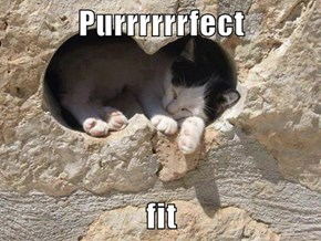 Purrrrrrfect   fit