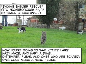 """Sylvia's Shelter Rescue"" (TTO ""Scarborough Fair"" by Simon & Garfunkel)"