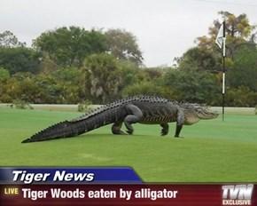 Tiger News - Tiger Woods eaten by alligator