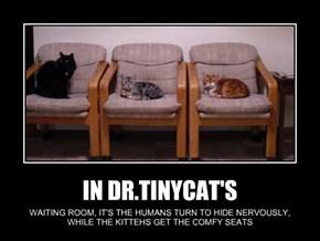 IN DR.TINYCAT'S