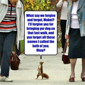 Squirrel apologies are sometimes motivated by the nutty contents of old-lady purses