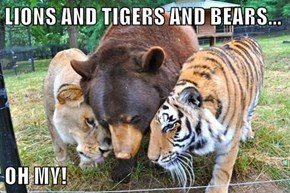 LIONS AND TIGERS AND BEARS...  OH MY!