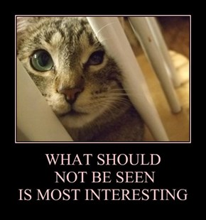 WHAT SHOULD  NOT BE SEEN IS MOST INTERESTING