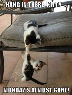 HANG IN THERE, KITTY ...  MONDAY'S ALMOST GONE!