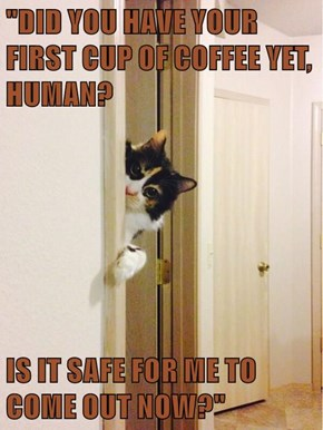 """DID YOU HAVE YOUR FIRST CUP OF COFFEE YET, HUMAN?  IS IT SAFE FOR ME TO COME OUT NOW?"""