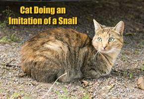 Cat Doing an Imitation of a Snail