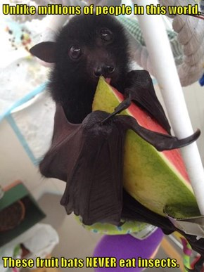 Unlike millions of people in this world,  These fruit bats NEVER eat insects.