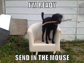 I'M READY  SEND IN THE MOUSE