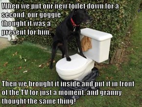 When we put our new toilet down for a second, our goggie                                                               thought it was a                                                             present for him,  Then we brought it inside and put it in f