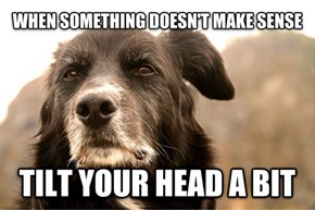 Advice for Dogs
