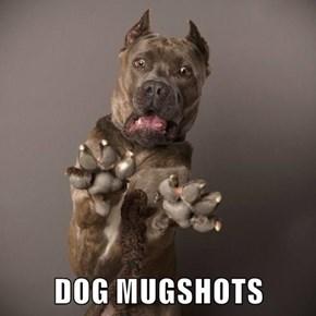 DOG MUGSHOTS