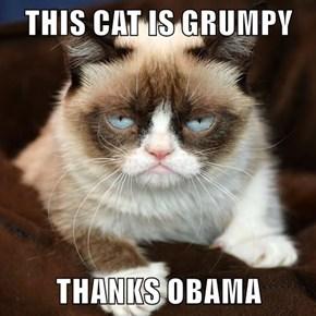 THIS CAT IS GRUMPY  THANKS OBAMA
