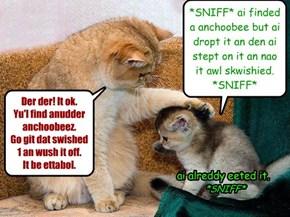 Anchoobeez cat-tastrofeez!