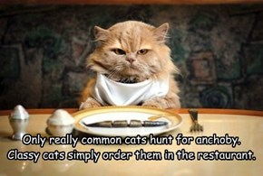 Only really common cats hunt for anchoby. Classy cats simply order them in the restaurant.